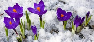 homeguides_articles_thumbs_10_best_plants_to_grow_in_winter_cover_jpg_600x275_q85_crop